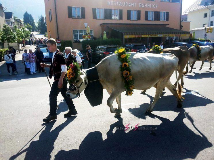 "Swiss town denies passport to Dutch vegan because she is ""too annoying"". Source: CEN"