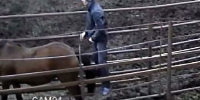 Furious girlfriend dumps partner after CCTV images 'show him having sex with a horse' on farm