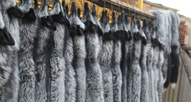 Which Variety of Fur is Worth Buying?